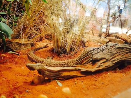 手足のあるヘビ
