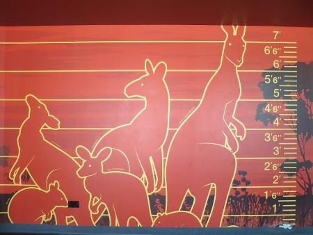 カンガルーの身長