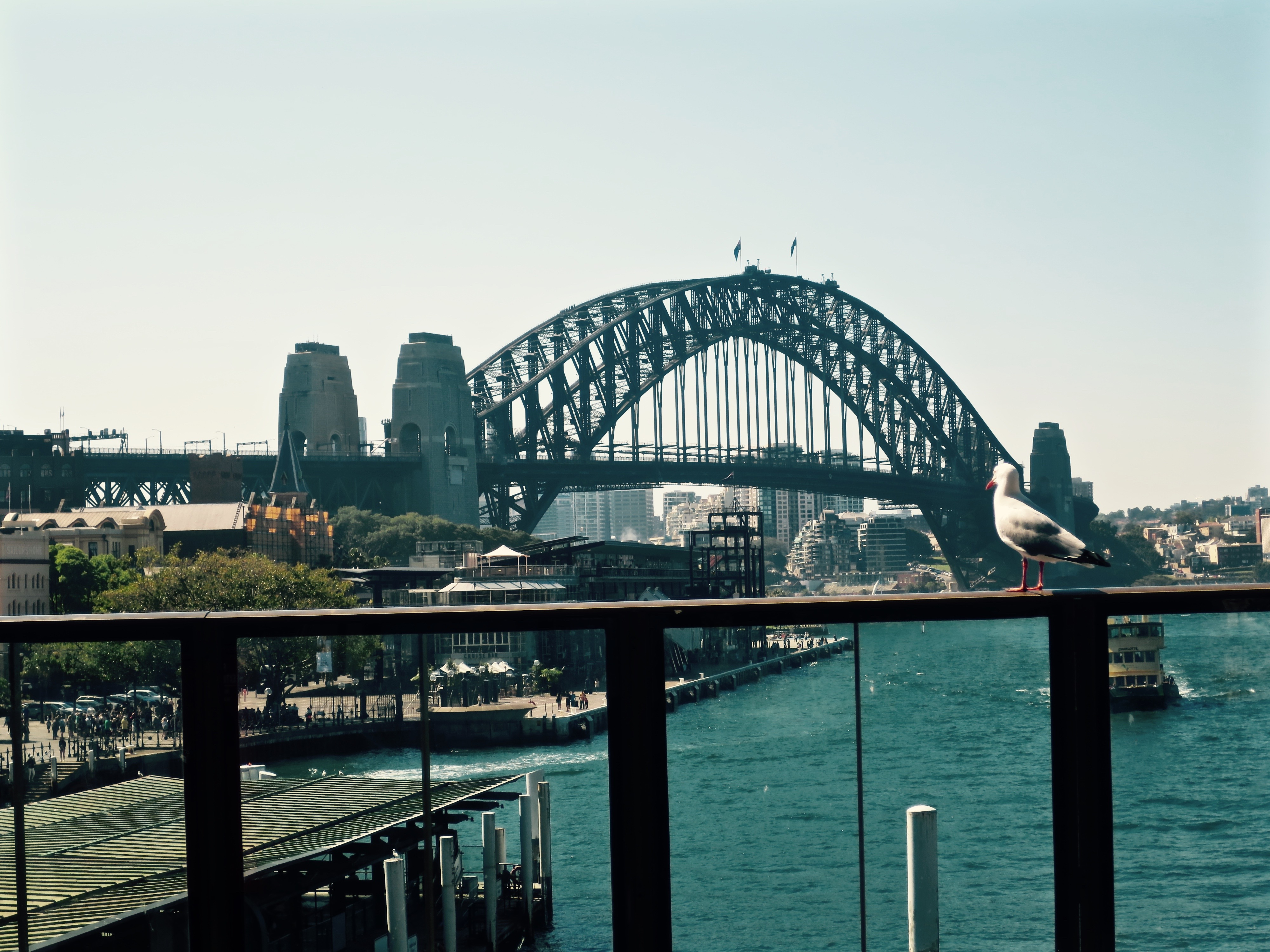 Harbor Bridge from Circular Quey