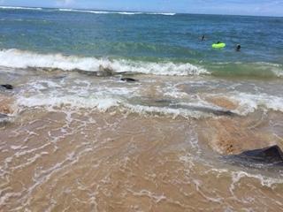 ラニアケアビーチ カメ