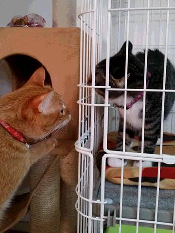 先住猫のとらいちさんとご対面