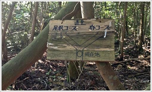 migita_choku_tani01.jpg