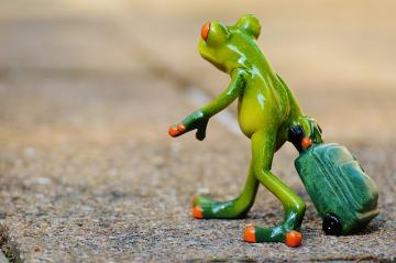 frog-897419_640_convert_20150918155438.jpg