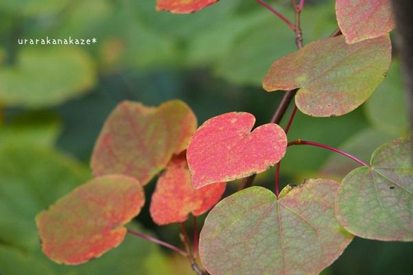 赤いハートの葉っぱ