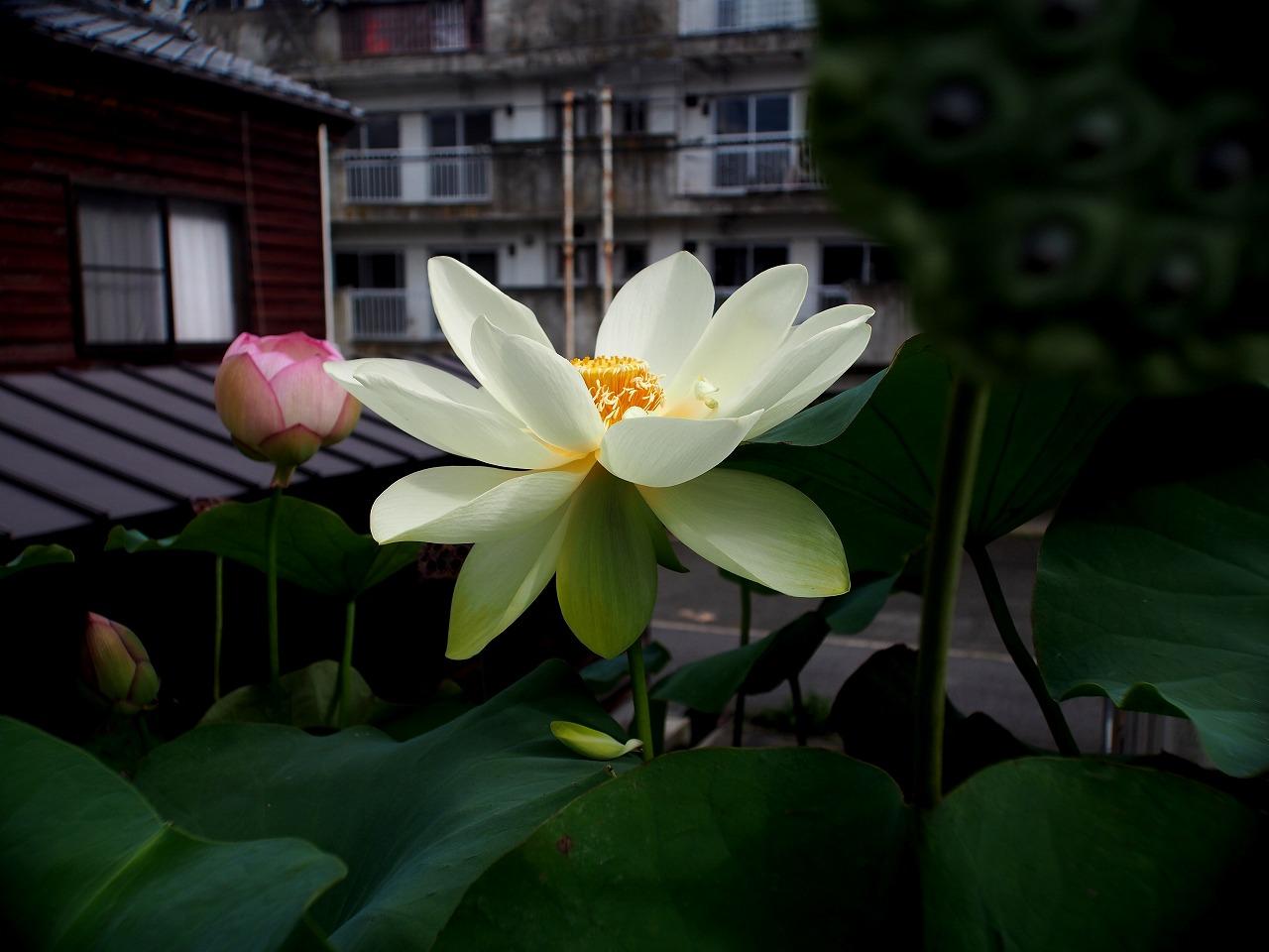 20150823-04_Kougyokuhai_Tsumabeni-P01.jpg