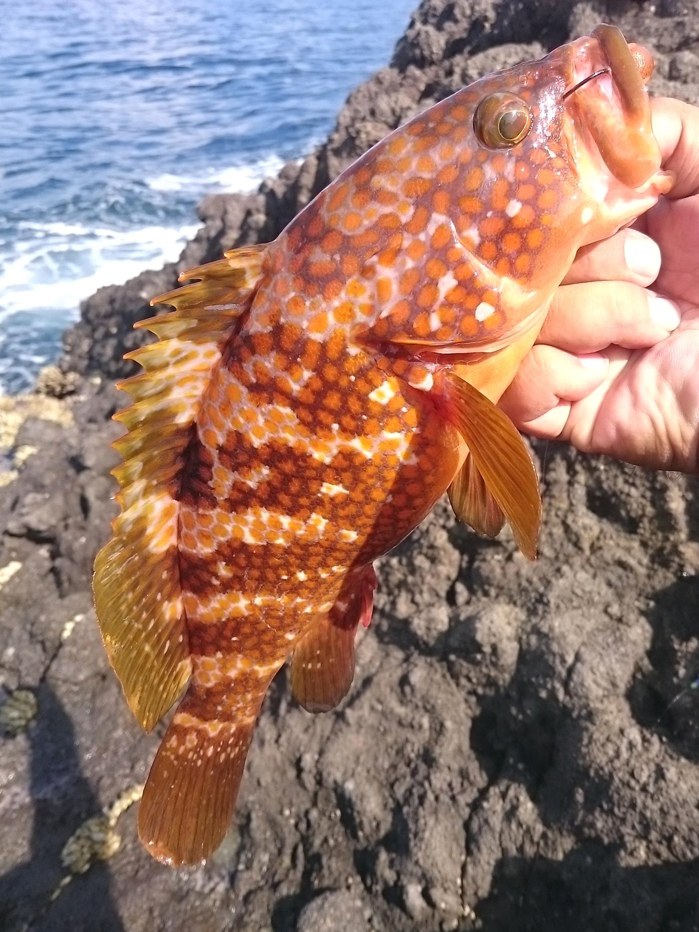 20150927-Fishing-X02.jpg