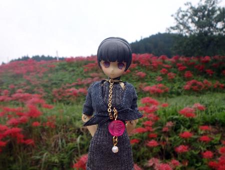 27_09_26 那須、簑沢の彼岸花 2