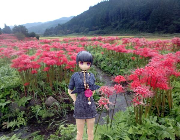 27_09_26 那須、簑沢の彼岸花 3