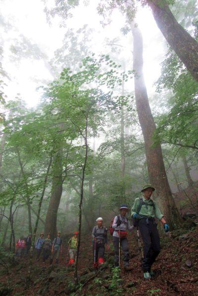 シオジの森を歩く