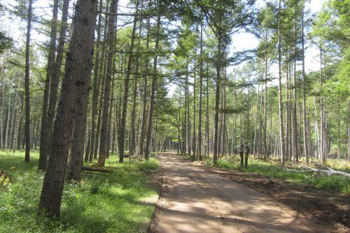 カラマツ人工林
