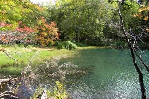 オンネトー湖畔の紅葉