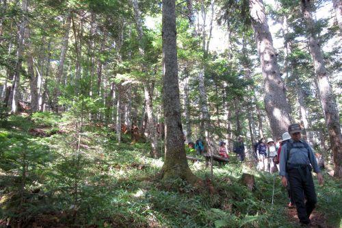 原生林歩き