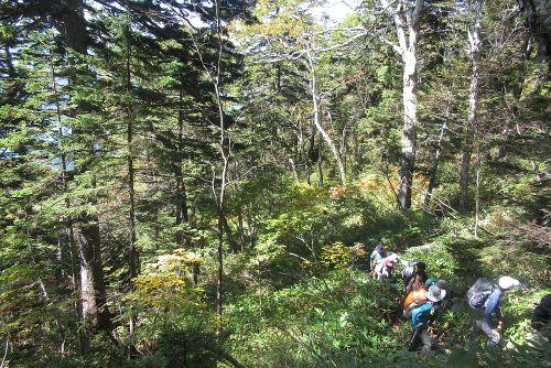 原生林のきつい登り