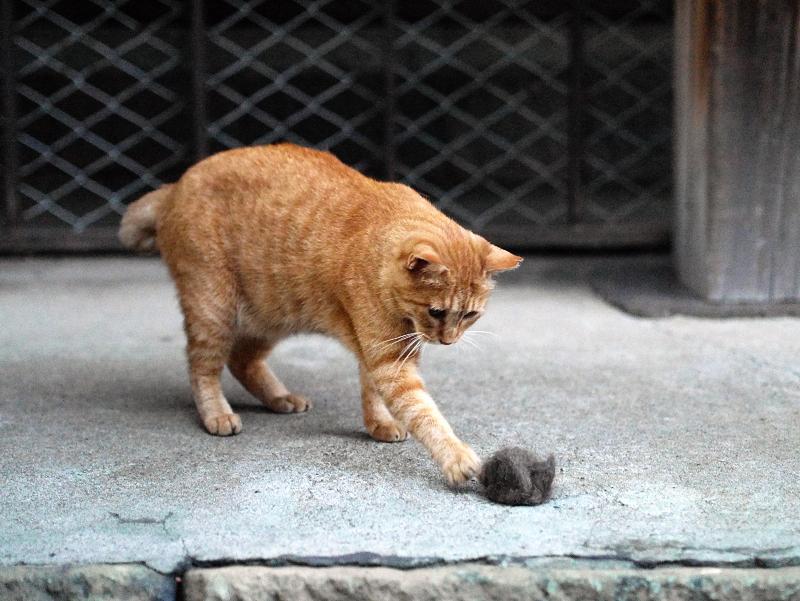毛玉に手を出す猫