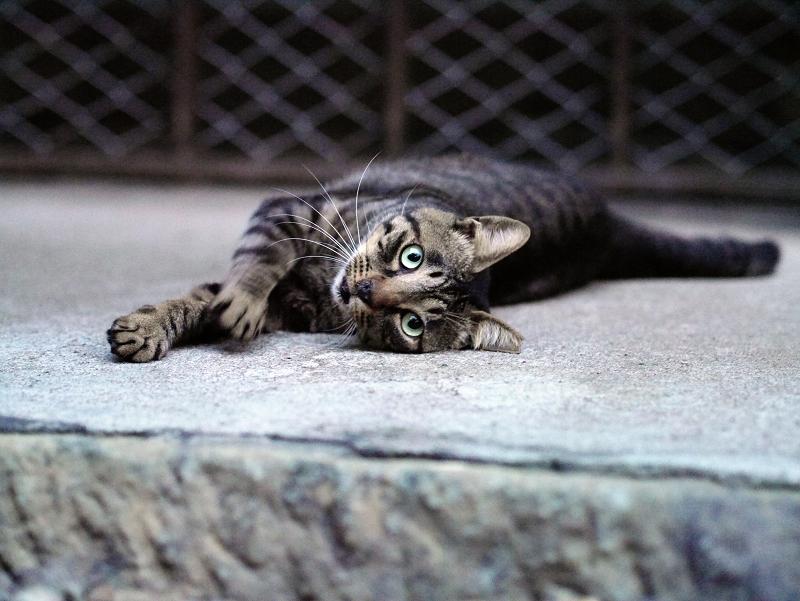 横になるカメラ視線猫