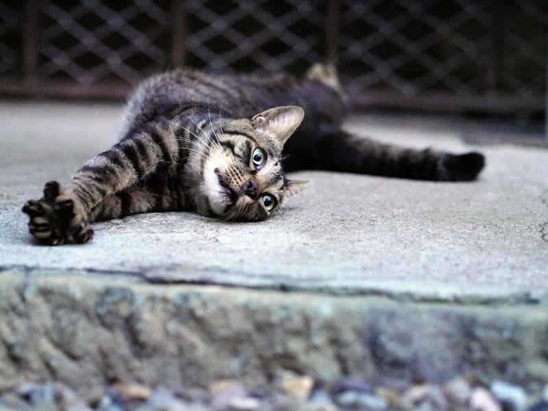 両手を伸ばして伸びをする猫