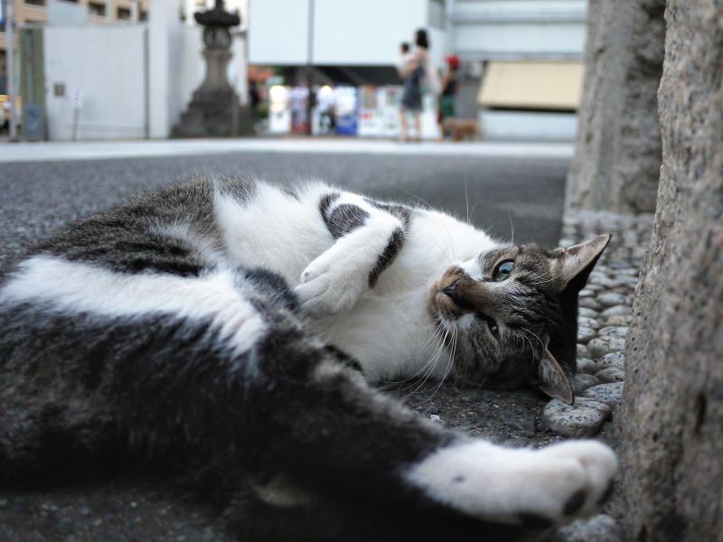 頭と足をくっつけてる猫