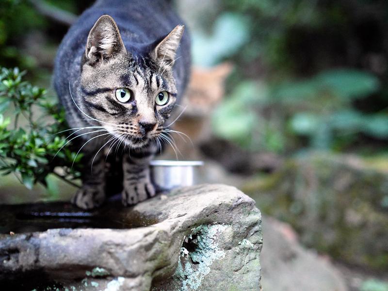 岩場で見てる猫