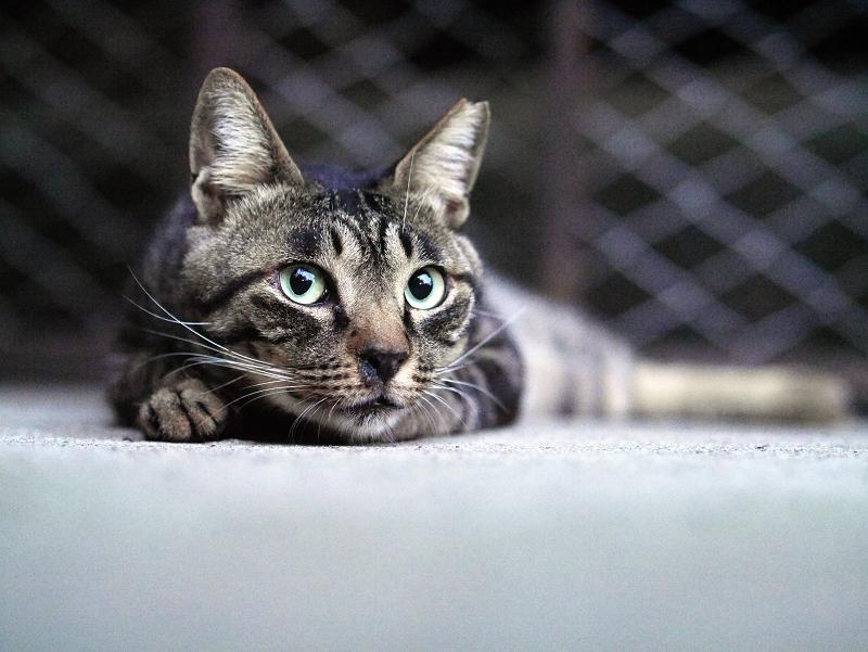 頭がデカイ猫2