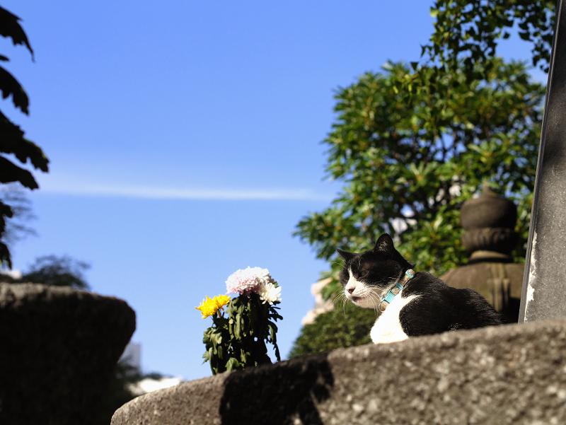 秋空と黒白猫1