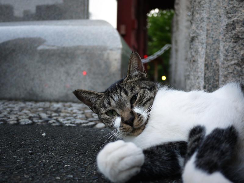 門柱の猫1