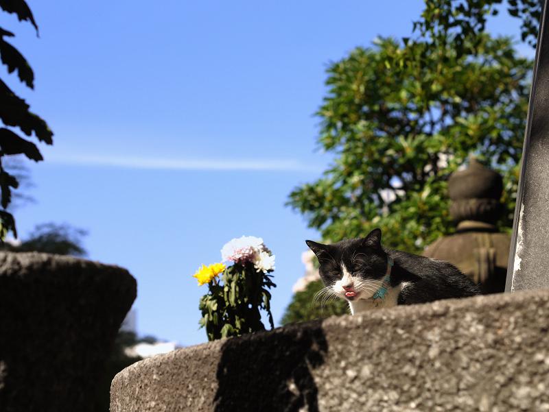 秋空と黒白猫2