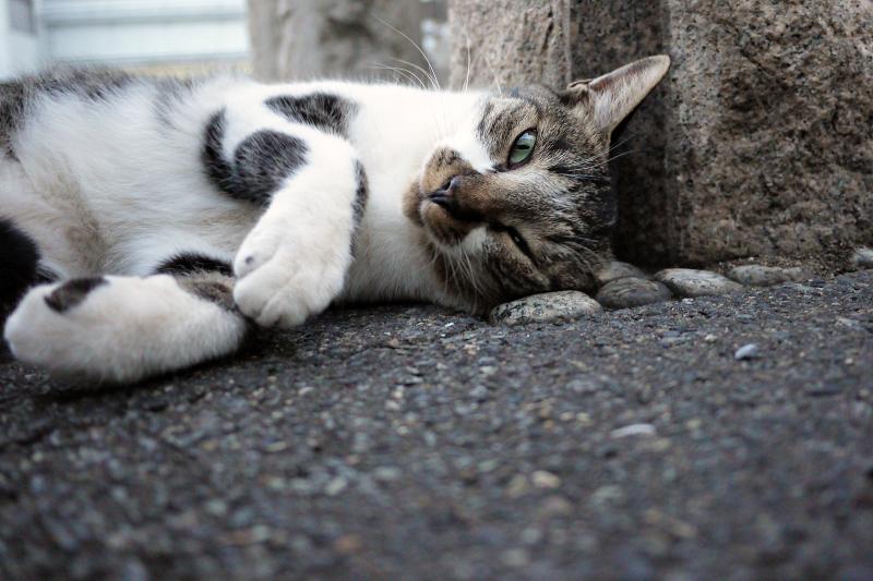 門柱の猫2