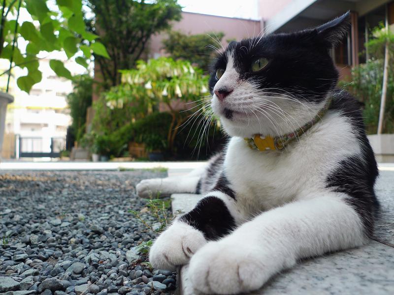 境内の友だち猫