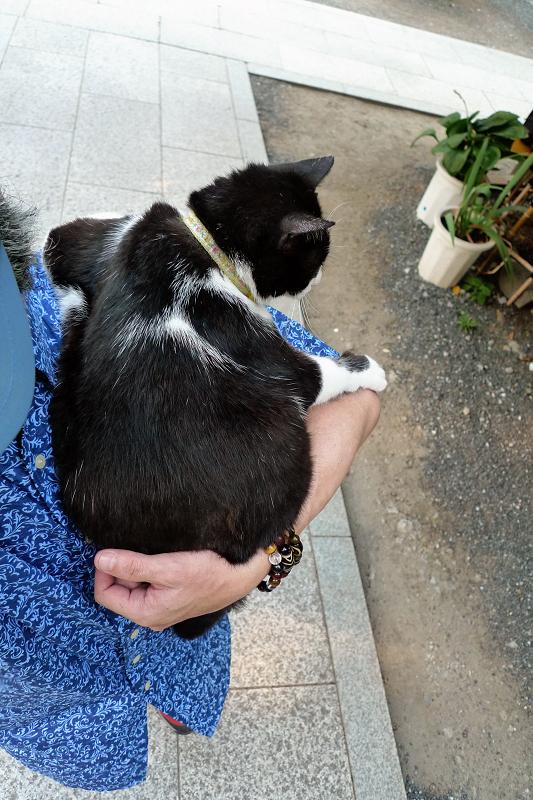 肩に乗った友だち猫