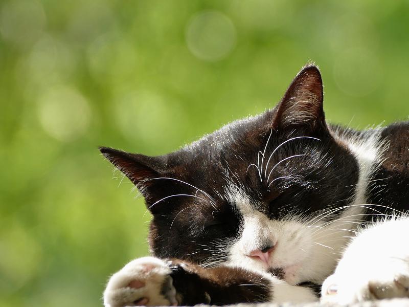 秋空の下で寝てる猫