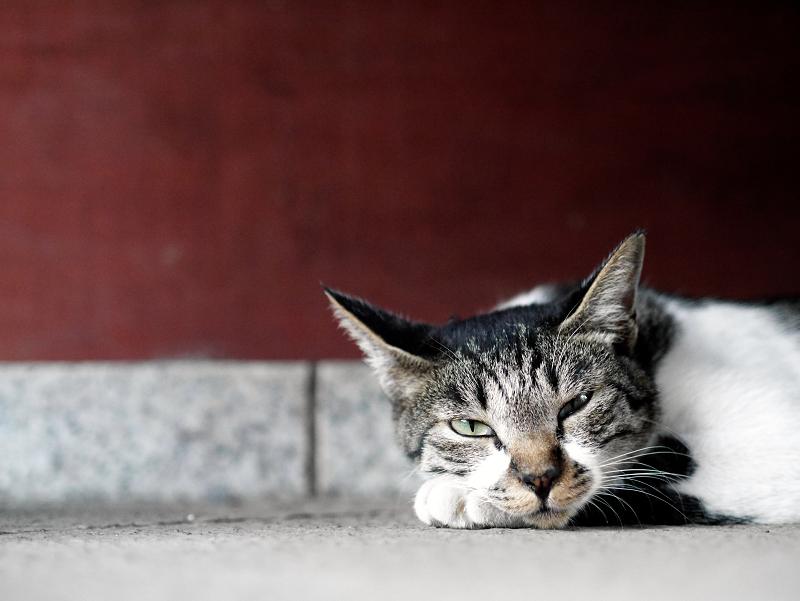 門扉とローアングルの猫