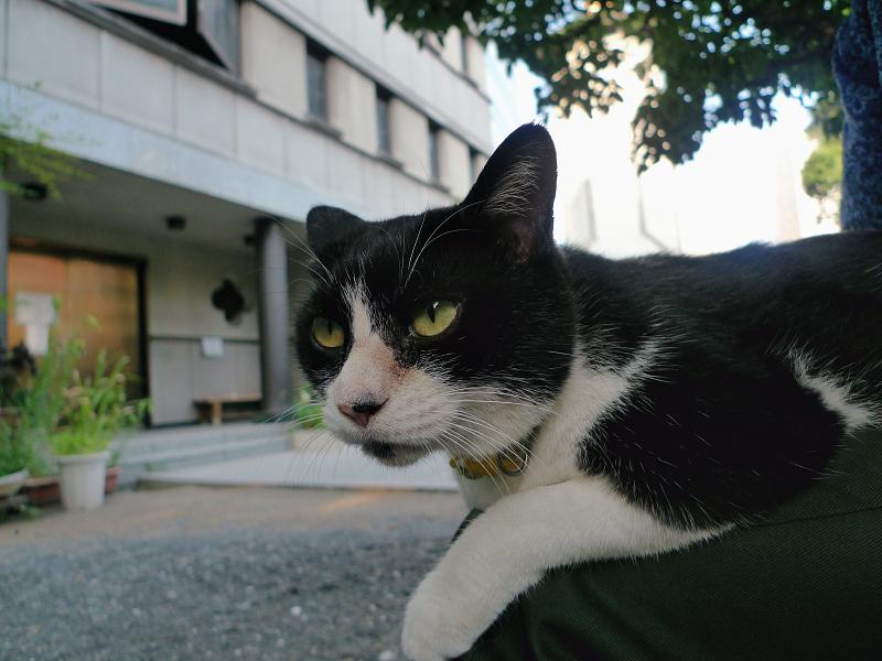 膝に乗ってる友だち猫