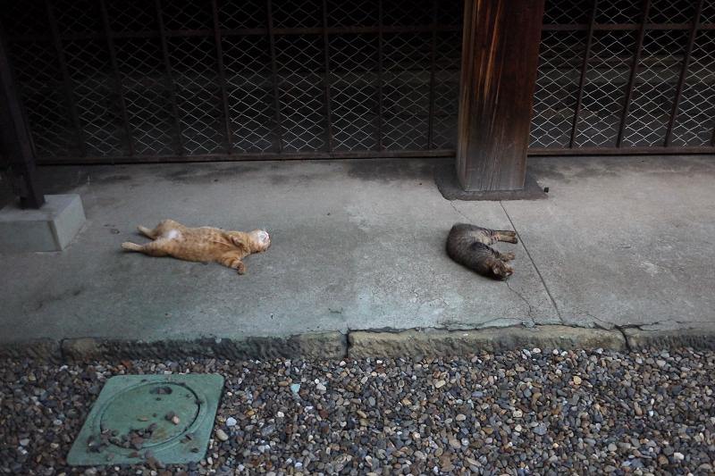 犬走りでへばってる猫