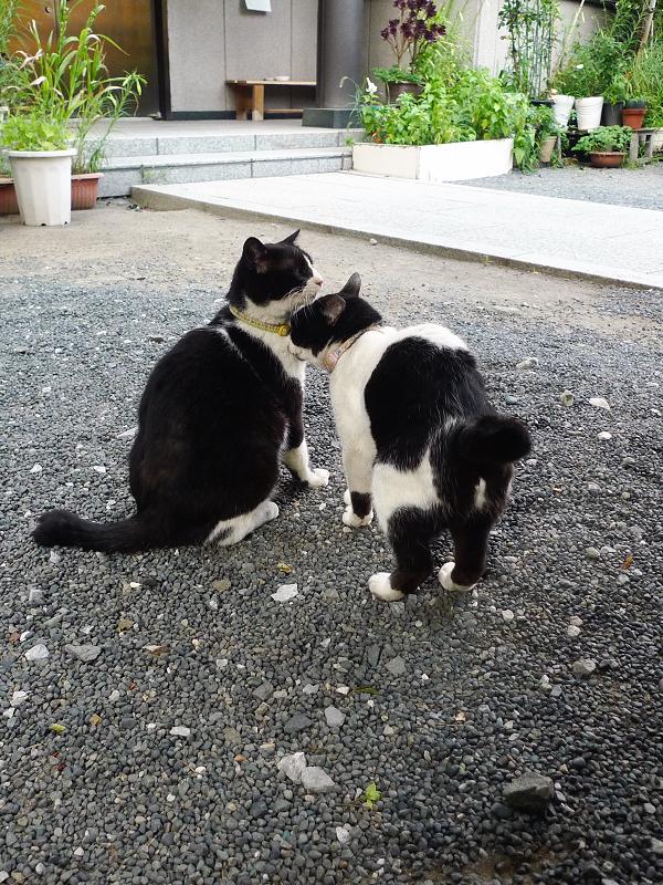 仲良し友だち猫