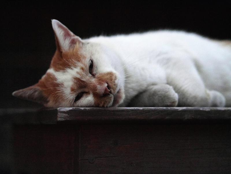 ベンチでマッタリの猫1