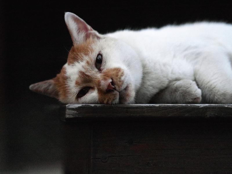 ベンチでマッタリの猫2