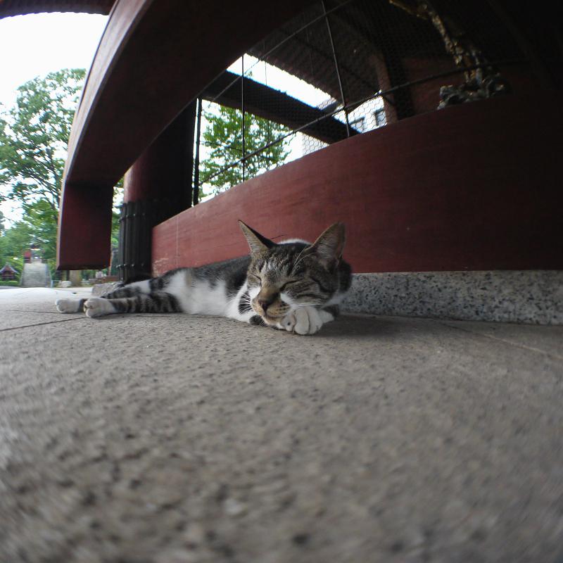 山門で熟睡猫