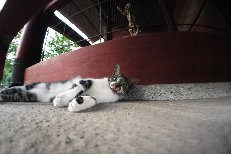 山門でベロを出す猫