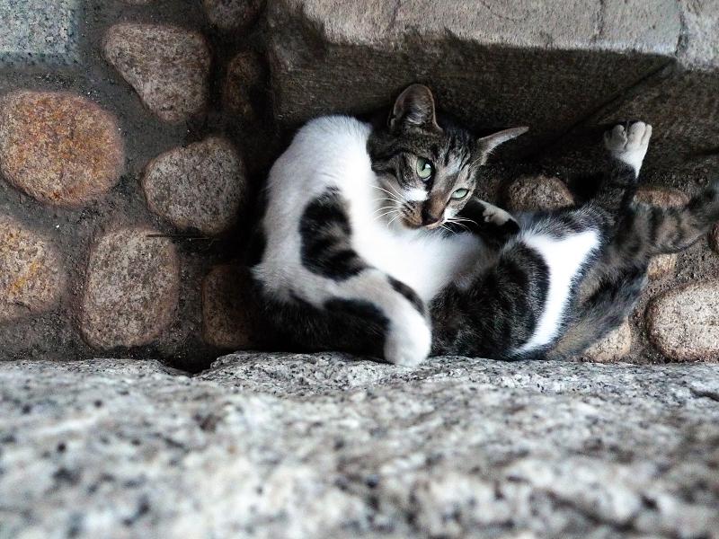 隙間に填ってる猫2