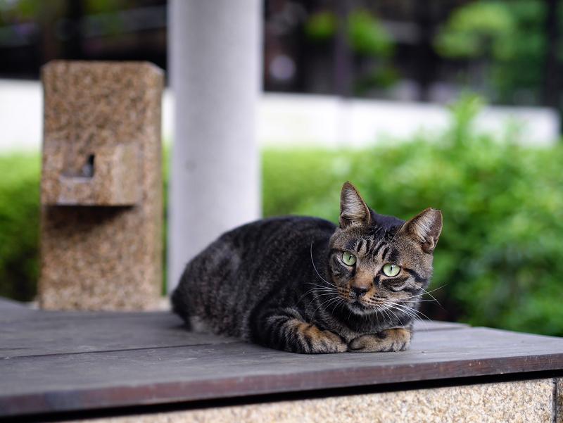 井戸の蓋の猫1