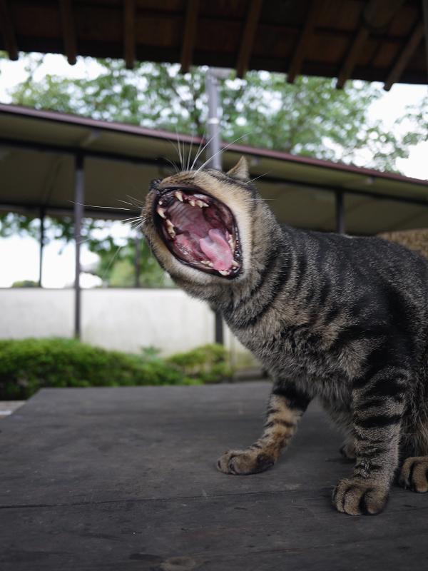 井戸の蓋の猫2