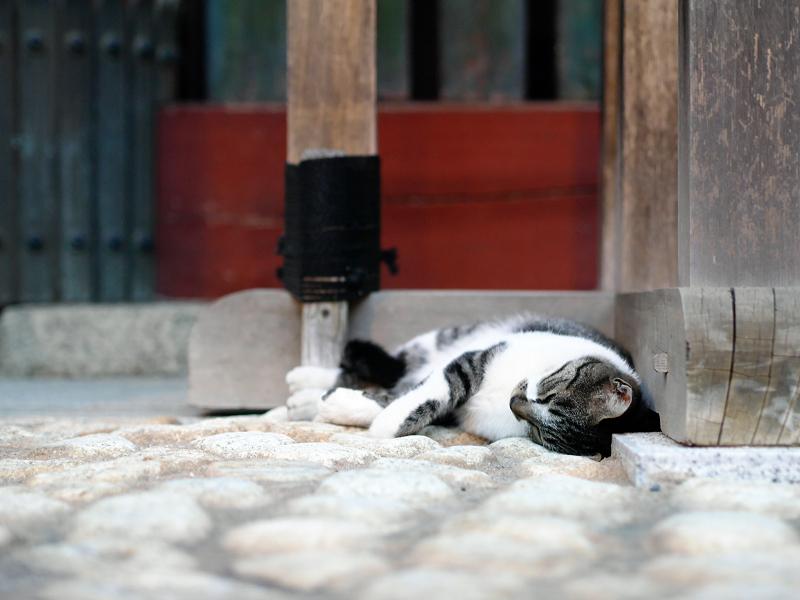 門柱で寝てる猫1