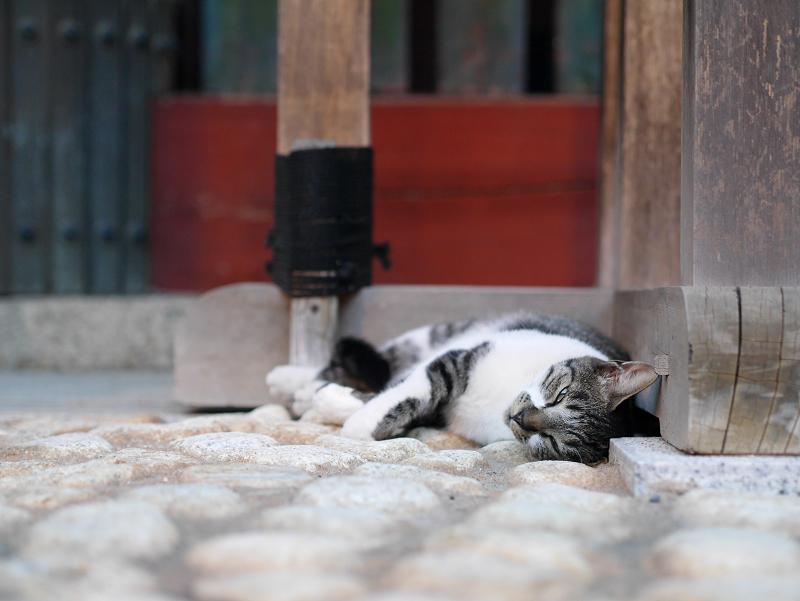 門柱で寝てる猫2