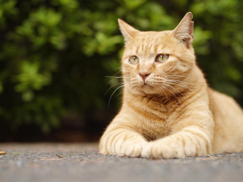 ドヤ顔で座る猫