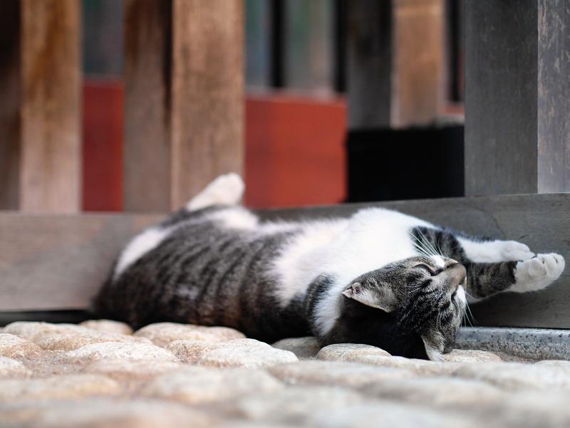 門扉で寝てる猫1