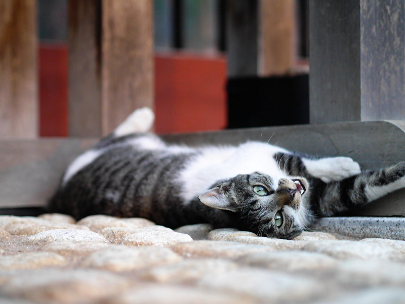門扉で寝てる猫2