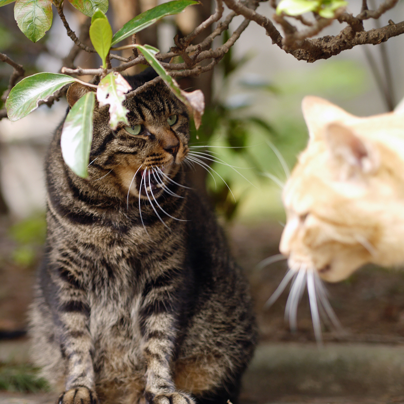 茂みで欠伸の猫