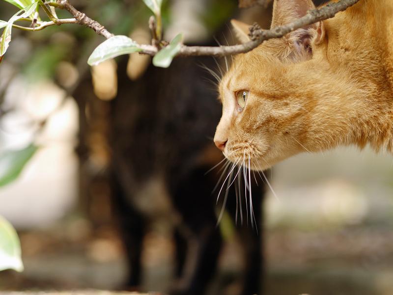 茂みで横顔の猫