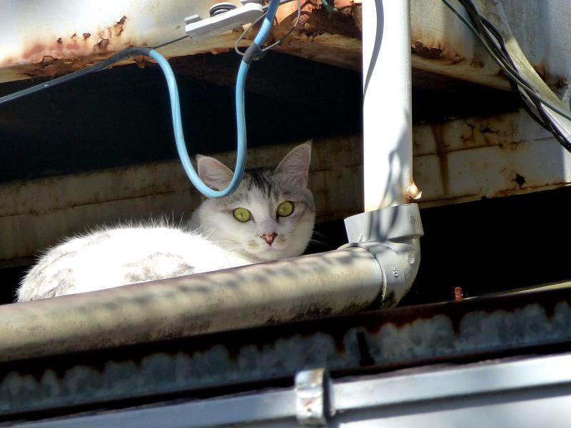 庇の間のネコ2