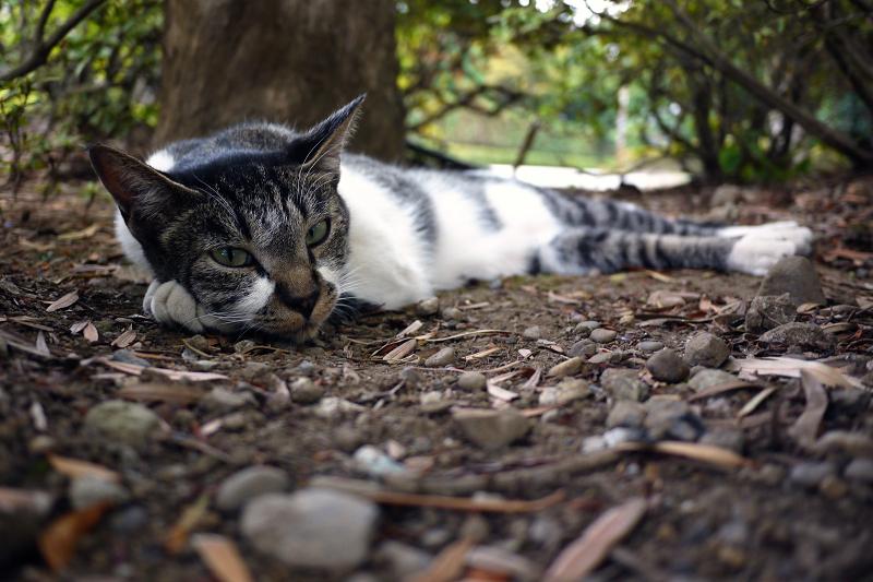 茂みの中で睨んでる猫